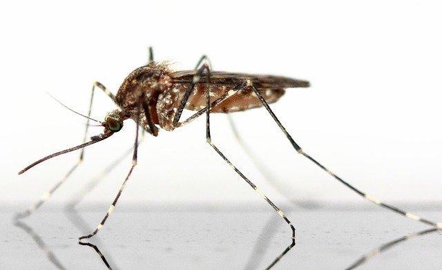 https://crescereduegemelli.com/anti-zanzare-per-bambini-e-neonati/
